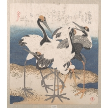 Totoya Hokkei: Five Storks by the Seashore - Metropolitan Museum of Art