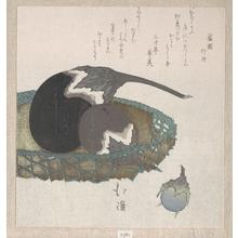 魚屋北渓: Eggplants in a Basket - メトロポリタン美術館