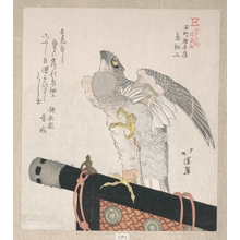 魚屋北渓: Hawk Made of Silk; Specialities of Karakiya in Kokucho - メトロポリタン美術館