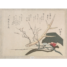 魚屋北渓: Hat, Deer-Horn and Plum Branch, Representing Jurojin, the God of Life - メトロポリタン美術館
