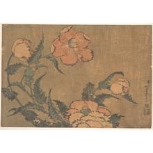Katsushika Hokusai: Poppies in the Wind - Metropolitan Museum of Art