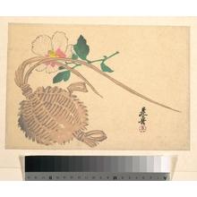 柴田是眞: Straw Basket for Fish (?) and Mokuge Flower - メトロポリタン美術館