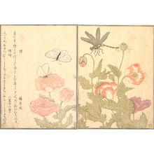 Kitagawa Utamaro: Butterfly and Dragonfly (Chô and Tonbo), from Picture Book of Selected Insects with Crazy Poems (Ehon Mushi Erabi) - Metropolitan Museum of Art