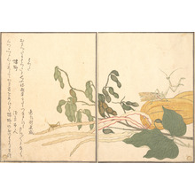 Kitagawa Utamaro: Praying Mantis and Cone-headed Grasshopper (Kamakiri and Batta), from Picture Book of Selected Insects with Crazy Poems (Ehon Mushi Erabi) - Metropolitan Museum of Art