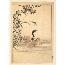 Unknown: A Pair of Geese with Camellias - Metropolitan Museum of Art