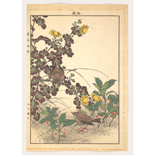 Imao Keinen: Two Birds and Crysanthemums, from Keinen kachô gafu (Keinen's Flower-and-Bird Painting Manual) - Metropolitan Museum of Art
