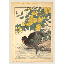 Imao Keinen: Cormorant and Kerria Rose (Yamabuki), from Keinen kachô gafu (Keinen's Flower-and-Bird Painting Manual) - Metropolitan Museum of Art