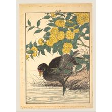 Imao Keinen: Cormorant and Kerria Rose (Yamabuki), from Keinen kachô gafu (Keinen's Flower-and-Bird Painting Manual) - Metropolitan Museum of Art