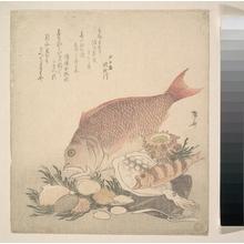 柳々居辰斎: Large and Small Fish Swimming Among Shells and Moss at the Bottom of the Sea - メトロポリタン美術館