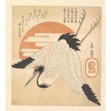 屋島岳亭: White Crane Flying across the Sun's Disc - メトロポリタン美術館