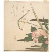 魚屋北渓: Warbler and Camellia - メトロポリタン美術館