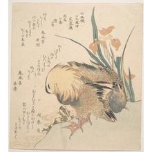 窪俊満: Pair of Mandarin Ducks and Iris Flowers - メトロポリタン美術館