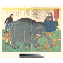 Utagawa Yoshitoyo: Recently Imported Big Elephant - Metropolitan Museum of Art
