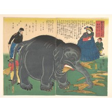 Utagawa Yoshitoyo: Newly Imported Great Elephant - Metropolitan Museum of Art