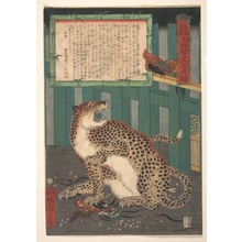 Kawanabe Kyosai: True Picture of a Live Wild Tiger - Metropolitan Museum of Art