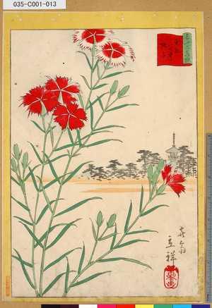 Utagawa Hiroshige II: 「三十六花撰」「東都谷中撫子」 「十二」 - Tokyo Metro Library