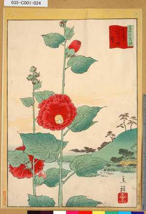 035-C001-024「三十六花撰」「東都あふひ坂葵」 「廿三」・・-『』