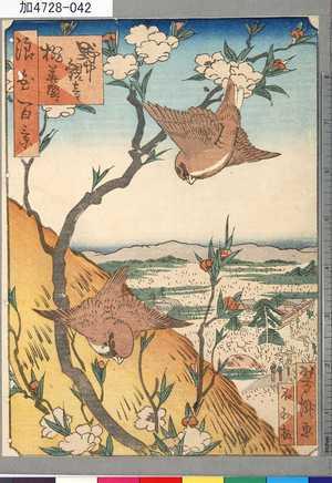 芳瀧: 「浪花百景」 「野中観音桃華盛り」 - 東京都立図書館