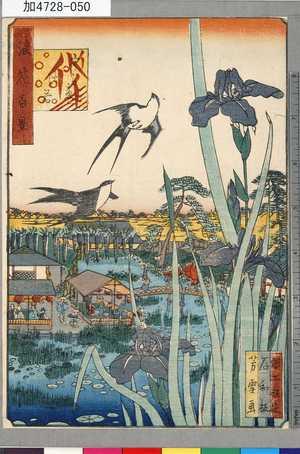 芳雪: 「浪花百景」 「うらゑ杜若」 - 東京都立図書館