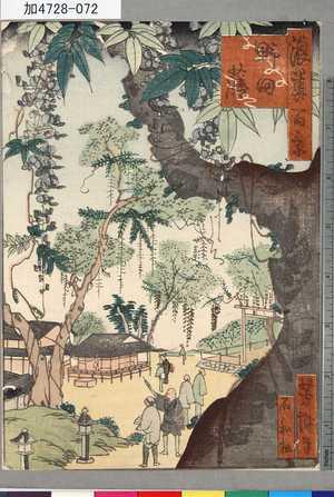 芳瀧: 「浪華百景」 「野田藤」 - 東京都立図書館