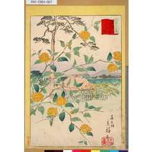 Utagawa Hiroshige II: 「三十六花撰」「東京山吹の里山ふき」 「六」 - Tokyo Metro Library