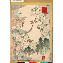 Utagawa Hiroshige II: 「三十六花撰」「東京谷中天王寺あさぎ桜」 「七」 - Tokyo Metro Library