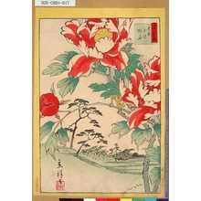 Utagawa Hiroshige II: 「三十六花撰」「東京北沢牡丹」 「十六」 - Tokyo Metro Library