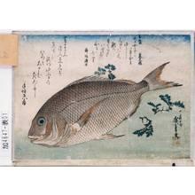 歌川広重: [魚づくし] [鯛に山椒] - 東京都立図書館