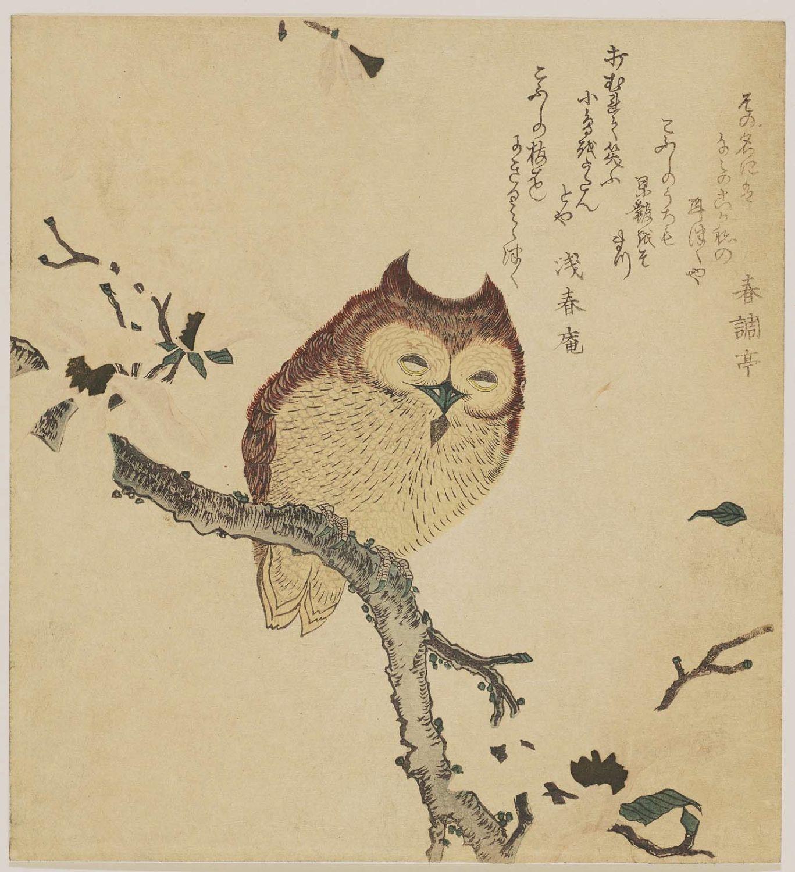 Kubo Shunman Horned Owl On Flowering Branch Museum Of