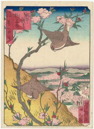 歌川芳滝: Peach Blossoms in Bloom at Nonaka Kannon Temple (Nonaka Kannon momohana sakari), from the series One Hundred Views of Osaka (Naniwa hyakkei) - ボストン美術館