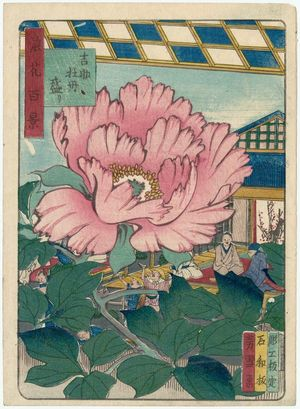 Nansuitei Yoshiyuki: Peonies in Full Bloom in the Garden of Kichisuke (Kichisuke botan sakari) , from the series One Hundred Views of Osaka (Naniwa hyakkei) - Museum of Fine Arts