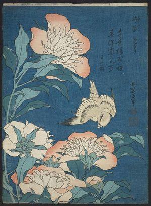 葛飾北斎: Peonies and Canary (Shakuyaku, kanaari), from an untitled series known as Small Flowers - ボストン美術館