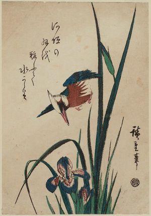 Utagawa Hiroshige: Kingfisher and Iris - Museum of Fine Arts