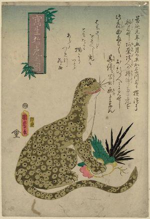 Utagawa Kunimaro I: Fierce Tiger [sic] Drawn from Life (Shasei môko no zu) - Museum of Fine Arts