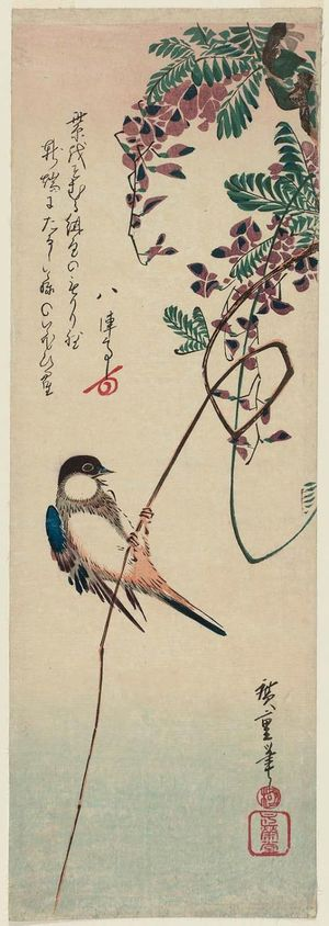 Utagawa Hiroshige: White-cheeked Bird and Wisteria - Museum of Fine Arts
