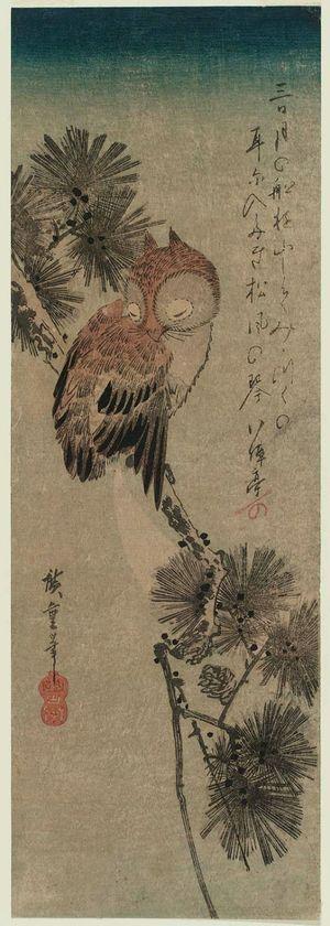 歌川広重: Small Horned Owl in a Pine Tree - ボストン美術館