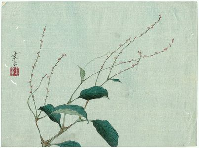 原田圭岳: Plant - ボストン美術館