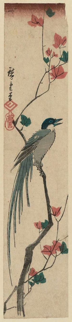 歌川広重: Long-tailed Bird and Maple Leaves - ボストン美術館
