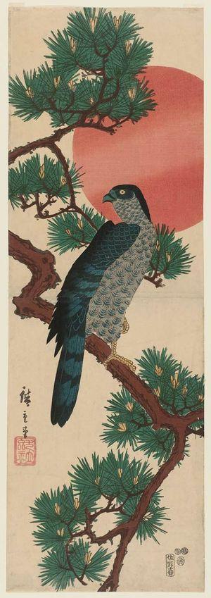 歌川広重: Falcon, Pine, and Sun - ボストン美術館
