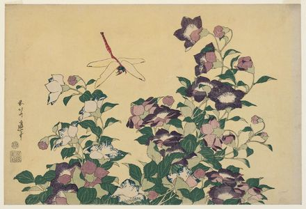 Katsushika Hokusai: Bellflower and Dragonfly, from an untitled series known as Large Flowers - Museum of Fine Arts