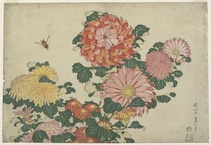 Katsushika Hokusai: Chrysanthemums and Horsefly, from an untitled series known as Large Flowers - Museum of Fine Arts