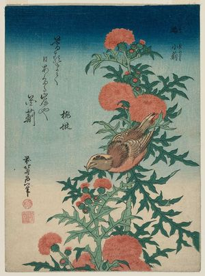 Katsushika Hokusai: Shrike and Blessed Thistle (Mozu, oniazami), from an untitled series known as Small Flowers - Museum of Fine Arts