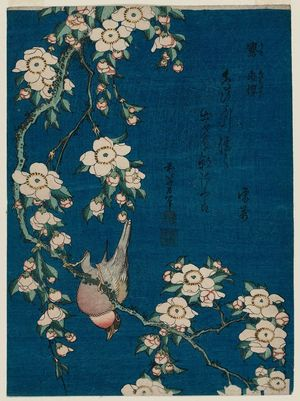 葛飾北斎: Bullfinch and Weeping Cherry (Uso, shidarezakura), from an untitled series known as Small Flowers - ボストン美術館