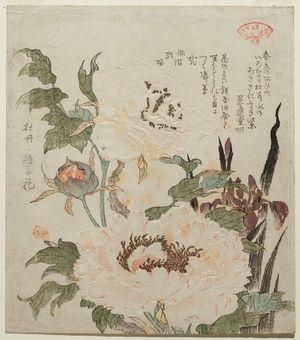 窪俊満: Iris and Peony, from the series Plants for the Kasumi Circle (Kasumiren sômoku awase) - ボストン美術館