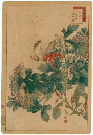 Nakayama Sûgakudô: No. 30 from the series Forty-eight Hawks Drawn from Life (Shô utsushi yonjû-hachi taka) - Museum of Fine Arts