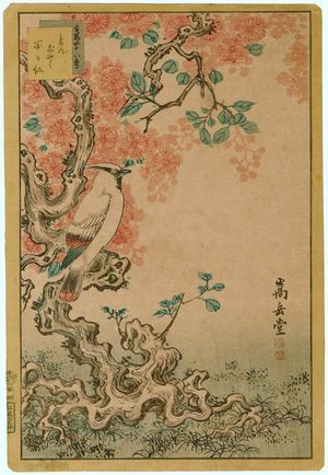 Nakayama Sûgakudô: No. 24 from the series Forty-eight Hawks Drawn from Life (Shô utsushi yonjû-hachi taka) - ボストン美術館