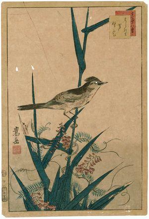 Nakayama Sûgakudô: No. 13 from the series Forty-eight Hawks Drawn from Life (Shô utsushi yonjû-hachi taka) - ボストン美術館