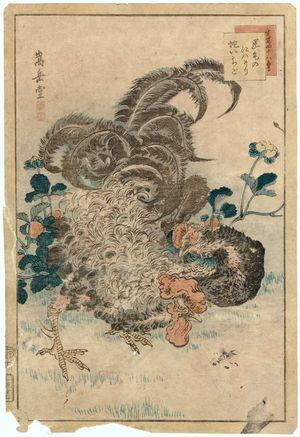 Nakayama Sûgakudô: No. 11 from the series Forty-eight Hawks Drawn from Life (Shô utsushi yonjû-hachi taka) - ボストン美術館