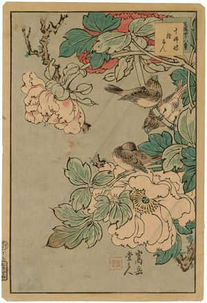 Nakayama Sûgakudô: No. 15 from the series Forty-eight Hawks Drawn from Life (Shô utsushi yonjû-hachi taka) - ボストン美術館