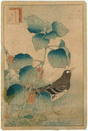 Nakayama Sûgakudô: No. 33 from the series Forty-eight Hawks Drawn from Life (Shô utsushi yonjû-hachi taka) - ボストン美術館